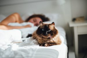 кошка на кровати с хозяином