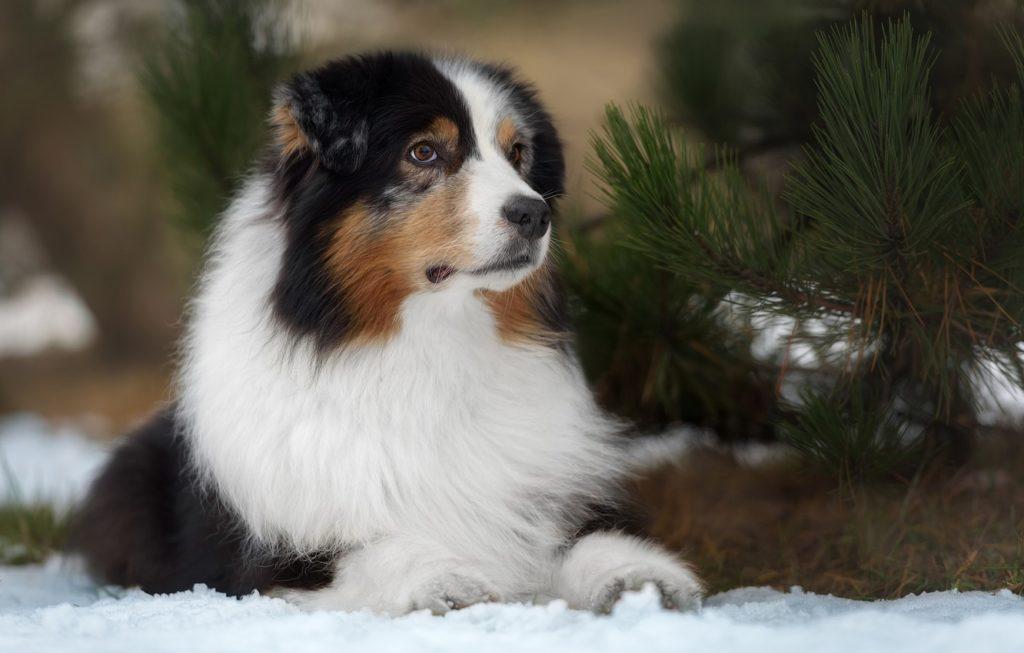 собака_зимой