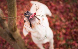 собака осенью на прогулке