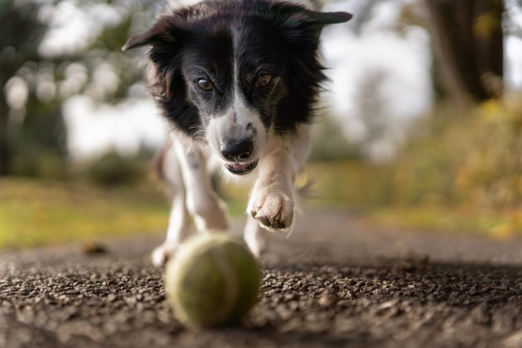 щенок бегает